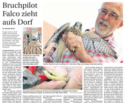 Bruchpilot Falco zieht aufs Dorf - Artikelbild NK Mecklenburgische Seenplatte